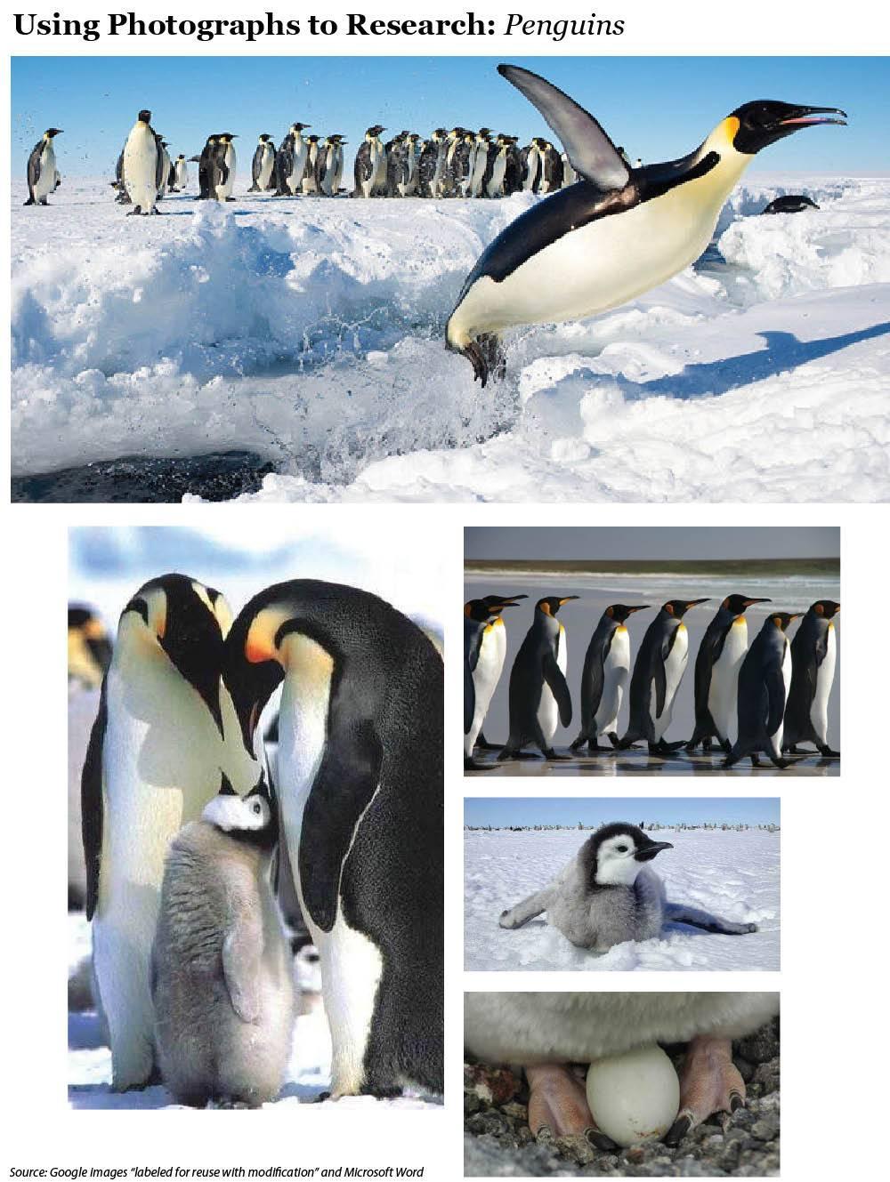 Penguins Photo Photo Array