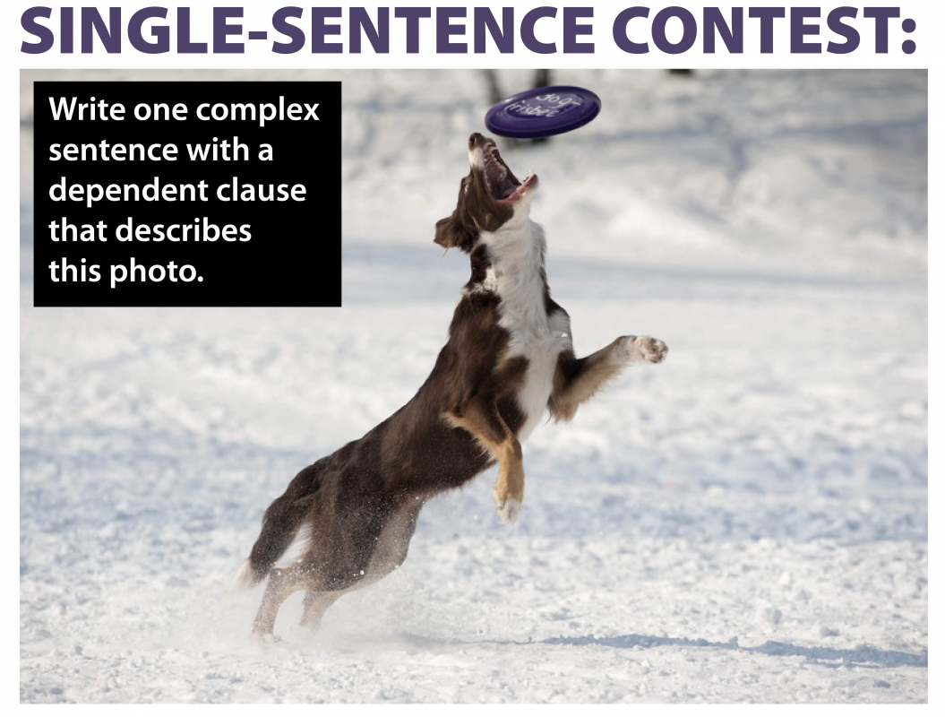 Single-Sentence Contests Cover