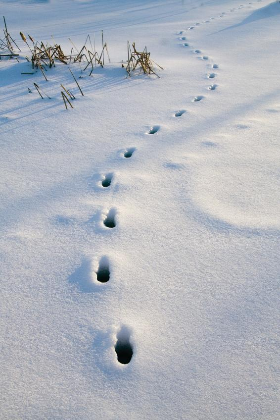 Introduce Annotation: Track footprints in snow